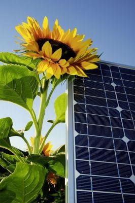 Immer mehr Anleger achten auf die ökologischen Aspekte der Projekte, die durch ihr Geld finanziert werden. (Foto: djd/UDI(PM))